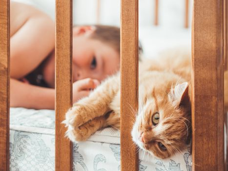 Toddler lies in bed with cute ginger cat. Little boy laughting. Child's friendship with domestic cat. Cozy home at morning.