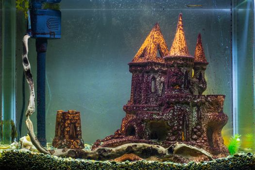 Empty aquarium without plants, affected by black algae and plaque on the scenery