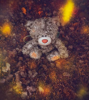 Conceptual Photo of a Outgoing Childhood. Thrown Away or Lost Teddy Bear Lying Down on the Ground covered with Dry Tree Leaves. Autumnal Mood.