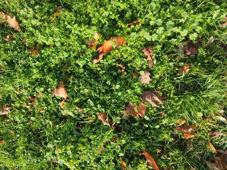 Grass close up green winter season modern high quality print