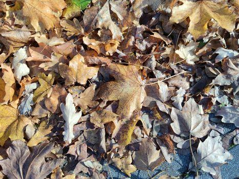 Autumn leaves close up modern background high quality modern print