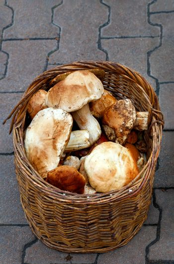 A bunch of porcini mushrooms in an old wicker basket against a background of gray paving slabs.