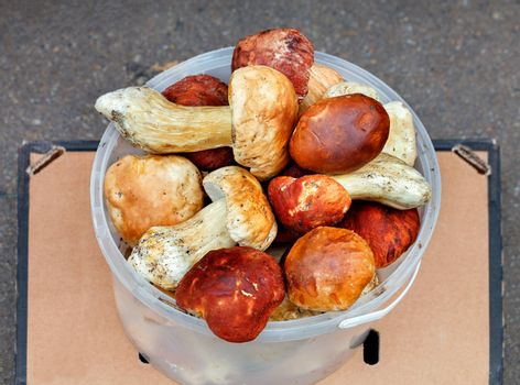A bunch of porcini mushrooms in a plastic bucket on the counter of a street market, close-up.