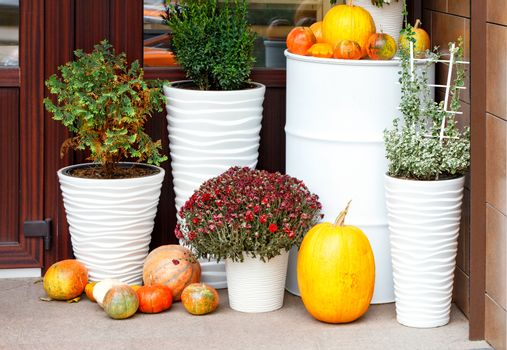 Autumn still life at the entrance of the house, pumpkins of various sizes and autumn chrysanthemum flowers in large snow-white pots.