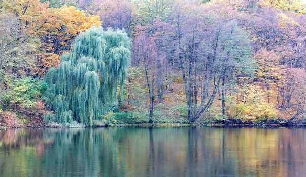 Pastel colors of autumn park and forest lake.