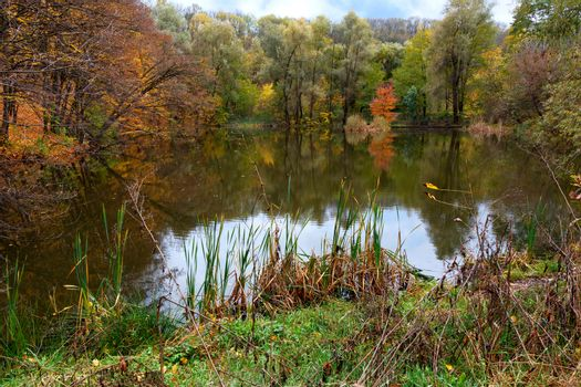 Landscape of autumn forest lake with blue sky reflection in water.