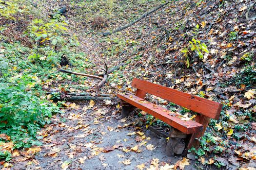 An old wooden bench stands on a hillside in an autumn forest.