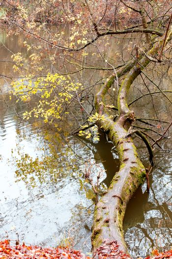 A fallen tree with autumn foliage in the water of a forest lake.