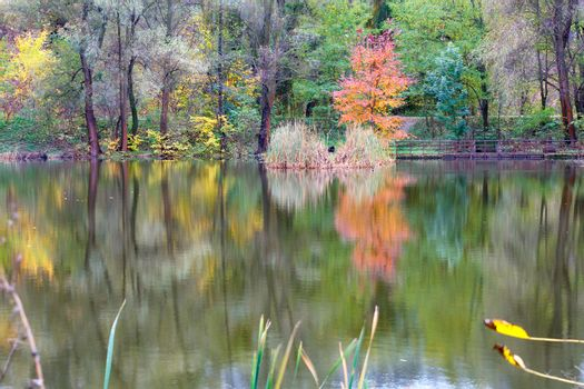 Landscape of an autumn forest lake with the reflection of colorful trees in the water.