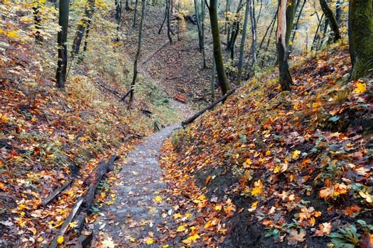A stone-paved path in the autumn forest descends from the hill.