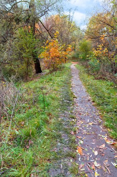 A dirt path passes through the autumn grove.