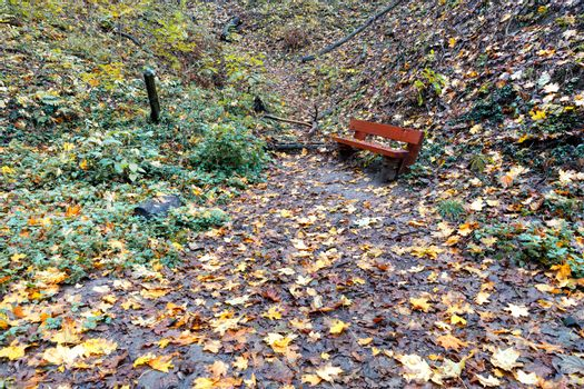 A forest path is strewn with fallen leaves and leads to an old bench.