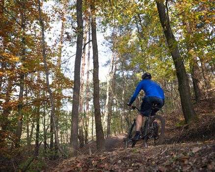 man on mountainbike on trail in autumn forest near zeist in the netherlands
