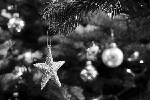 A star-shaped spruce tree decoration during Christmas