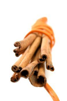 Tied Bunch of cinnamon Sticks