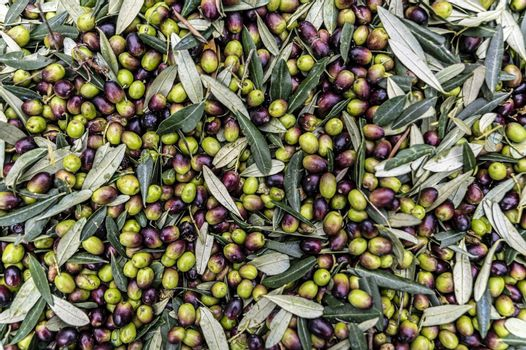 texture of the freshly harvested olive deposited in the bin