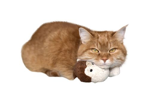 Cat red lies isolated on a white background