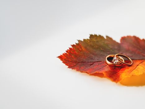 Golden wedding rings on bright and colorful autumn leaf. Monochrome geometry with light and shadow. Minimalism. Fall season.