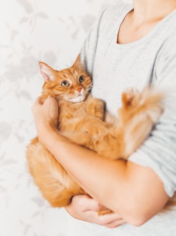 Woman cuddles her cute ginger cat. Fluffy pet looks pleased and sleepy. Fuzzy domestic animal. Cat lover.