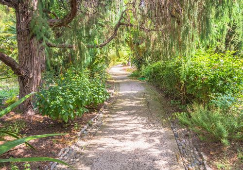 Relaxing and peaceful pathway in botanical garden during summer season
