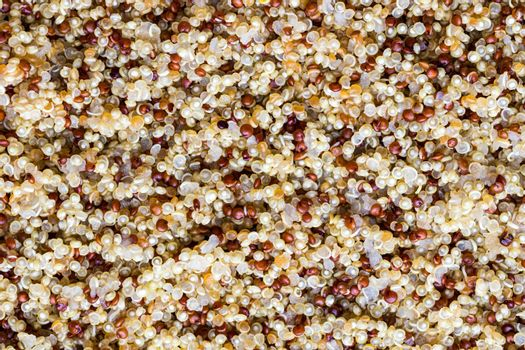 An overhead view of an cooked mixture of red and white quinoa. Food texture.