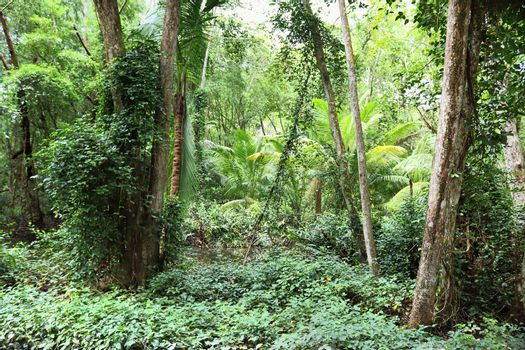 Beautiful green rainforest shots in different places on the Seyc