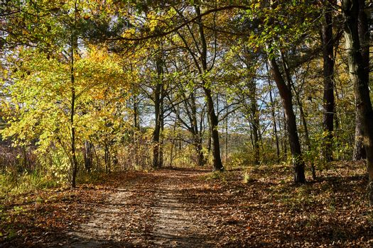 leaves on a dirt road in the woods during fall