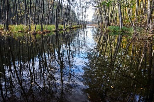 reflection of trees in the calm water of the canal during autumn