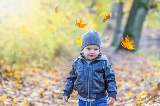 Cute little boy is walking under falling maple leaves in autumn park. Photo in soft light autumn colors.
