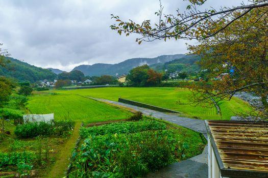 View of fields and countryside, in Shuzenji, Izu Peninsula, Japan