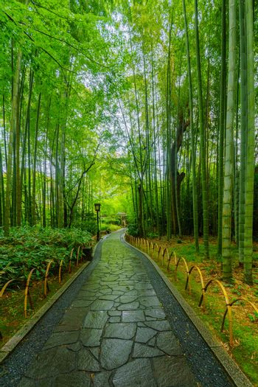 View of the small bamboo forest, in Shuzenji, Izu Peninsula, Japan