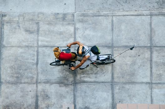 Man with his dog in the front of his bicycle, view from above
