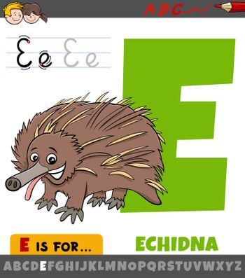 Educational cartoon illustration of letter E from alphabet with echidna animal for children