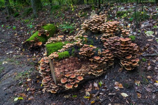 group of fungi in the forest during autum