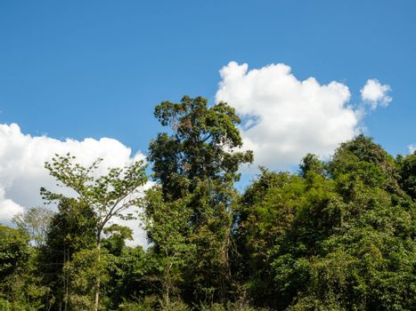 Green forest on the background of the sky and white clouds