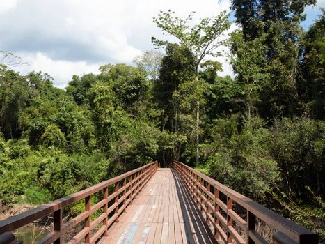 A long wooden bridge in the middle of the forest