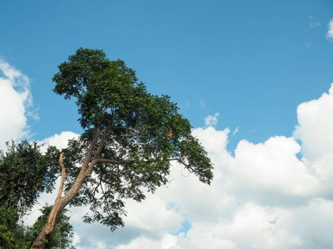 Green trees on cloud and sky background