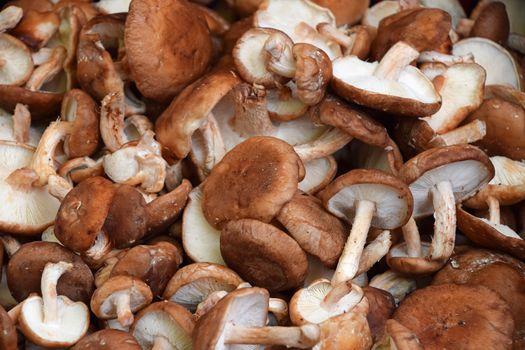 Shiitake edible mushrooms at retail display