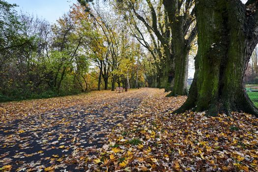 trees and a leafy alley in a park during autumn