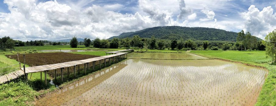 Panoramic view of beautiful countryside Rice fields and mountain in Thailand