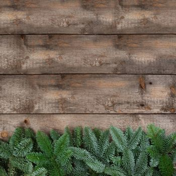 Spruce twigs on a wooden background with copy space for text flat lay top view template