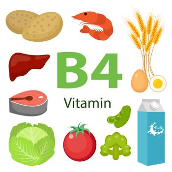 Vitamin B4 nutrition infographic with medical and food icons diet, healthy food and wellbeing concept
