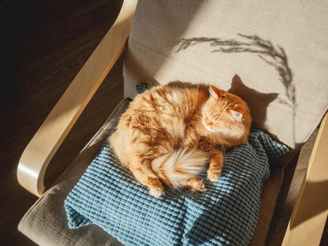Top view on cute ginger cat lying on pillow. Fluffy pet is sleeping on chair. Cozy home lit with sun.