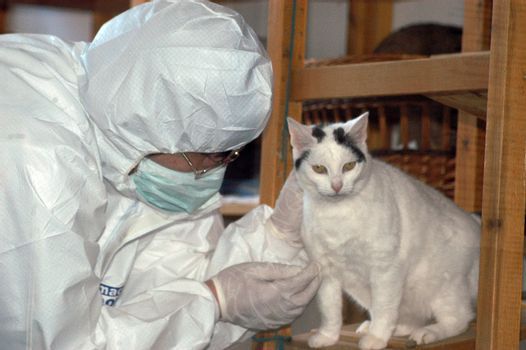 wear a protective suit in case of danger of epidemics