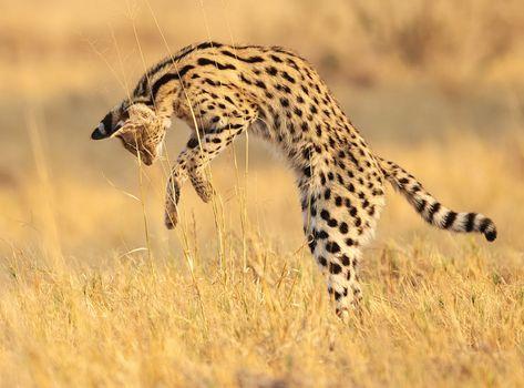 Wildlife Photography (Premium)