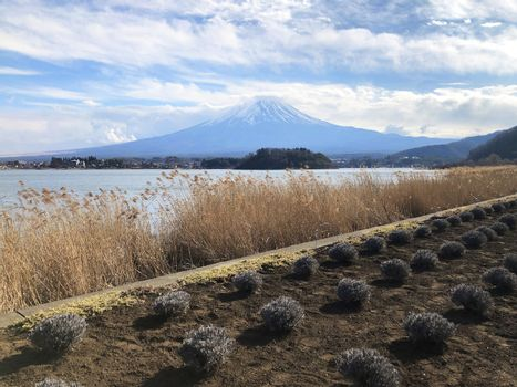 Beautiful view of  Mountain Fuji and Lake Kawaguchiko in Japan