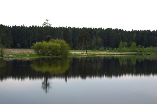 Water near the forest. Reflecting trees in the water.