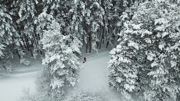 The winter forest in the mountains is covered with fresh snow. A group of people is walking along the trail. The view from the top. Fog in the gorge. Coniferous trees, firs in the snow. Kazakhstan