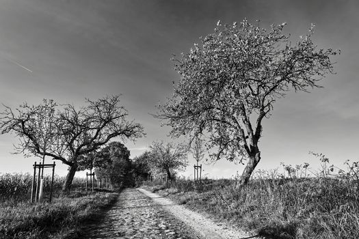 Rural landscape with a paved road and deciduous trees during autumn