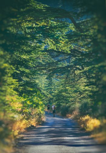 Couple Walking Along Beautiful Natural Trail. Excursion to Barouk Cedars Reserve. Active Retreat Summer Vacation. Beautiful Nature of Lebanon.